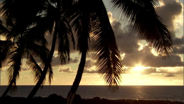 a breeze rustles silhouetted palm trees on a beach at sunset. - palm tree stock videos & royalty-free footage
