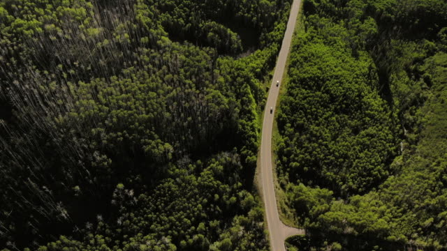 stockvideo's en b-roll-footage met luchtige zonnige zomerdag aerial 4k video van grand mesa national forest highway 65 - naaldbos