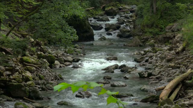 vídeos de stock, filmes e b-roll de breitach mountain stream in breitachklamm near oberstdorf, allgau, swabia, bavarian alps, bavaria, germany, europe - alta baviera