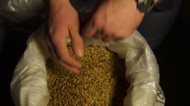 brewer sifts through barley before adding to beer mash - brauerei stock-videos und b-roll-filmmaterial