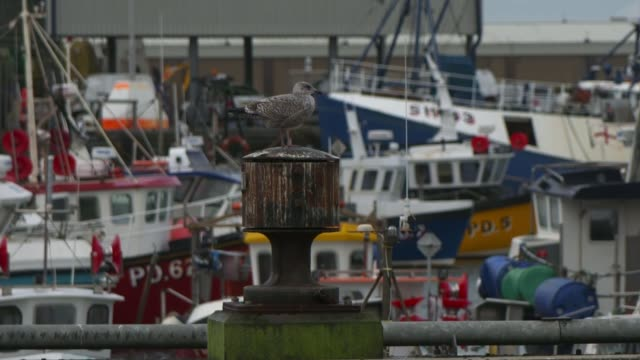 draft withdrawal plan scottish reaction / opinions in peterhead uk scotland peterhead boats at peterhead harbour stall at fish market vox pops... - water bird stock videos & royalty-free footage