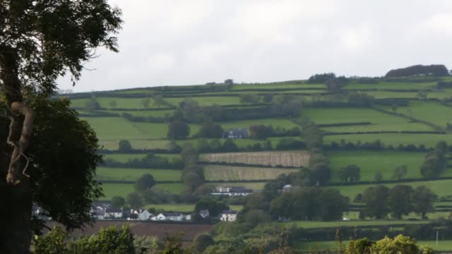 and sinn fein clash over brexit customs plan; northern ireland: ext birds in trees general views of northern irish countryside. - bird stock videos & royalty-free footage