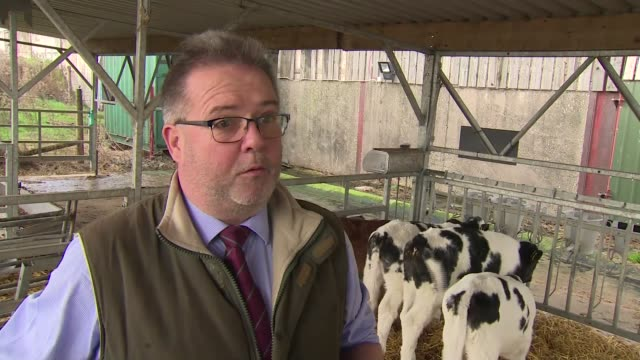 veterinary sector waits anxiously to find out effects of leaving the eu; shropshire: oswestry: brownlow veterinary group: int various of john... - herefordshire bildbanksvideor och videomaterial från bakom kulisserna