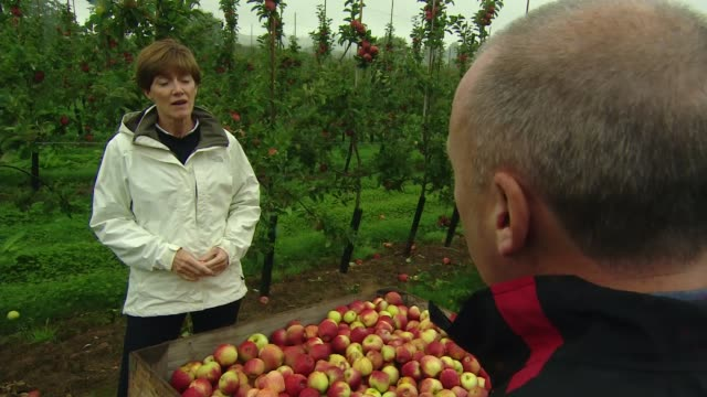 Farmers urge government to provide postBrexit clarity ENGLAND Worcestershire EXT Close shot of red apples on tree in fruit farm orchard Various of...