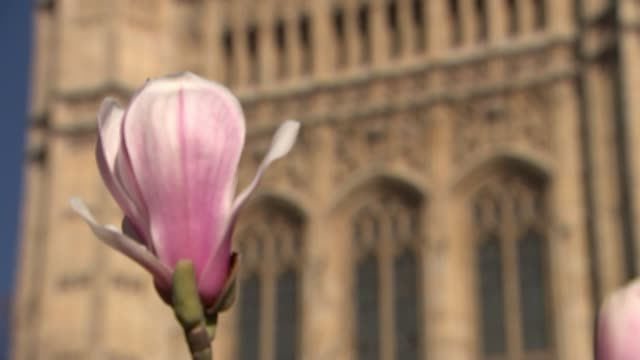 Theresa May says that MPs will get vote on leaving with no deal or delaying exit ENGLAND London Victoria Tower Gardens EXT Pink flowers with Victoria...
