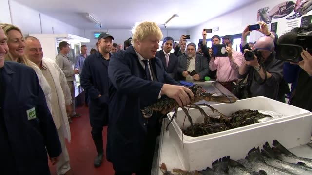 uk and eu agree brexit transition deal lib / england suffolk lowestoft sam cole food group photography** boris johnson mp holding lobster at fish... - boris johnson stock videos & royalty-free footage