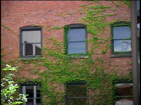 brick, windowed building, covered in ivy