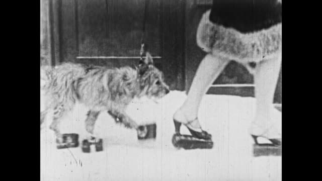1926 bricks become a popular winter accessory as people and animals put them on their feet - 1926 stock videos & royalty-free footage