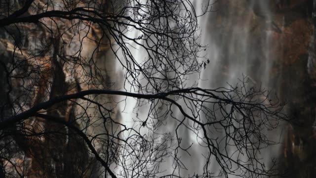 vídeos de stock, filmes e b-roll de bridalveil fall and tree - cachoeira bridalveil yosemite