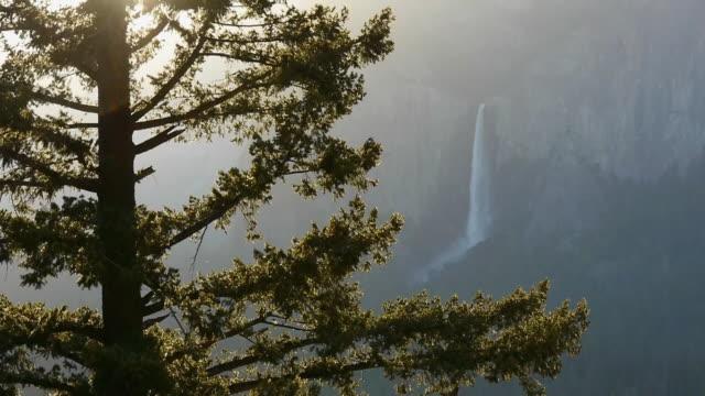 Bridalveil Fall, morning sunlight, tree in foreground in Yosemite National Park, California