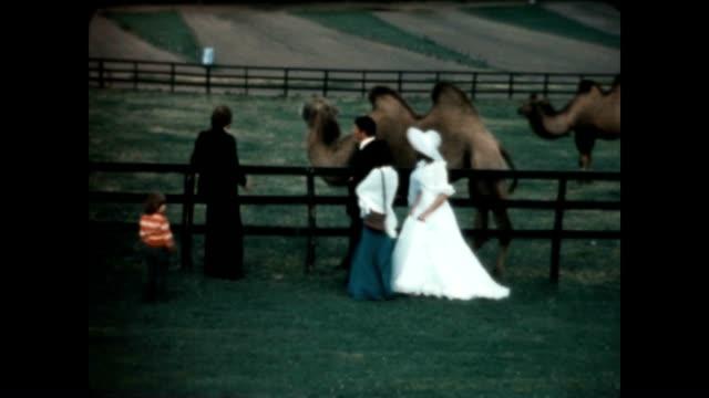vidéos et rushes de bride and groom take a look at a dromedary camel. - nostalgie
