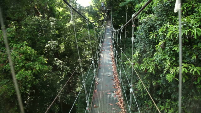 bridge in a rainforest - costa rica stock videos and b-roll footage