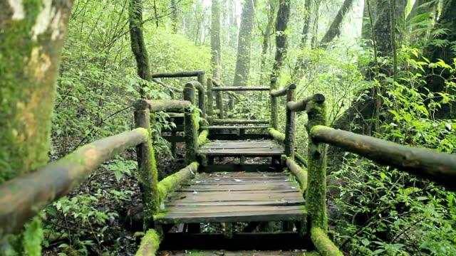 vídeos de stock e filmes b-roll de ponte para a selva, parque nacional de doi inthanon - hd format
