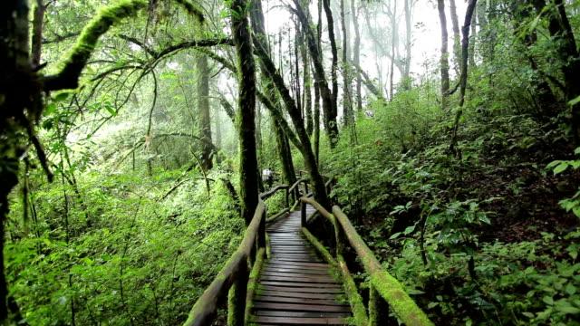 vídeos y material grabado en eventos de stock de puente en la selva en doi inthanon national park - árbol tropical