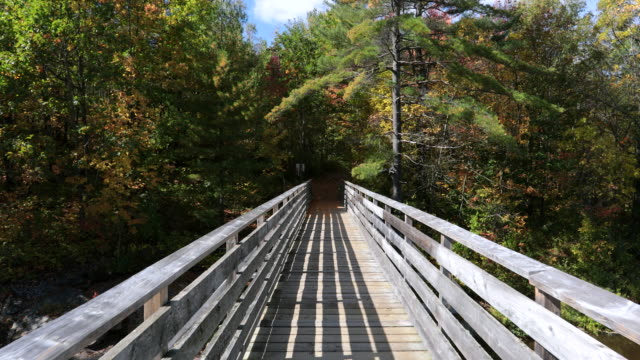 bridge over rapids in the forest in autumn - elevated walkway stock videos & royalty-free footage