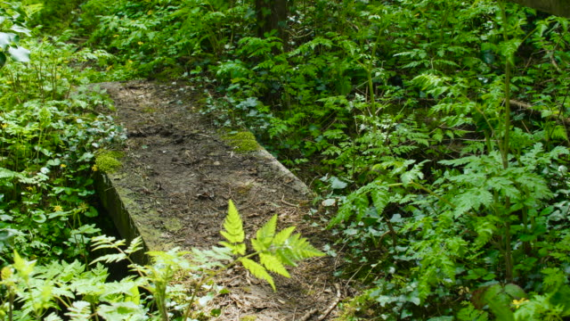 bridge over small stream in woodland - bush stock videos & royalty-free footage