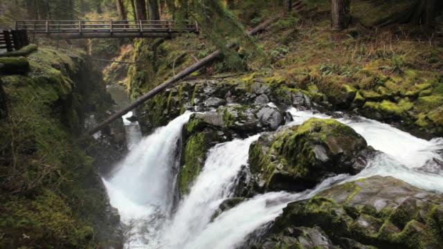 vídeos de stock, filmes e b-roll de ms, bridge over the sol duc waterfall, olympic national park, washington - olympic national park