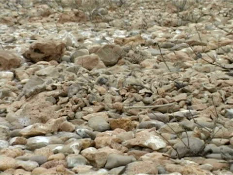 bridled tern, sterna anaethetus, camouflaged chick asleep on nest of stones, zoom in to cu, oman - ペルシャ湾点の映像素材/bロール