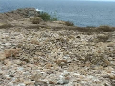 bridled tern, sterna anaethetus, egg camouflaged in nest, wa zoom in to cu, oman - ペルシャ湾点の映像素材/bロール