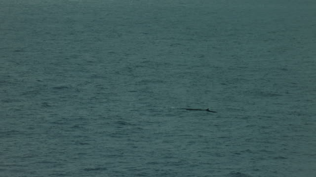 brief view of whale spout and dorsal fin - fin whale stock videos & royalty-free footage