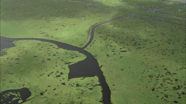 vidéos et rushes de briere marshes - algues