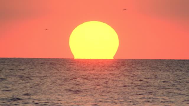 vídeos de stock, filmes e b-roll de bright, big round sun setting over water - gaivota