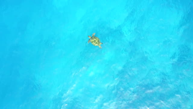 Bright Clear Water with Sea Turtle Swimming Below Surface