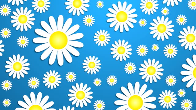 bright daisy wallpaper 1 - (hd loop) - floral pattern stock videos and b-roll footage