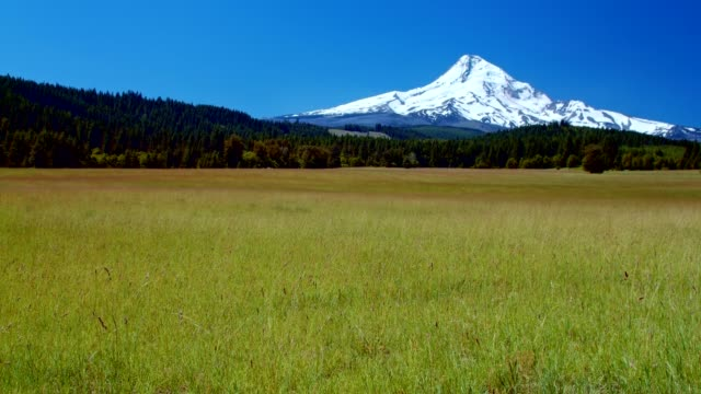 Bright Green Grassy Meadow and Blue Skies by a Snowcapped Mountain 1 Summer on Mound Hood