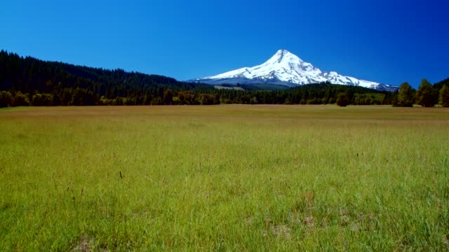 bright green grassy meadow and blue skies by a snowcapped mountain 2 summer on mound hood - portland oregon stock-videos und b-roll-filmmaterial