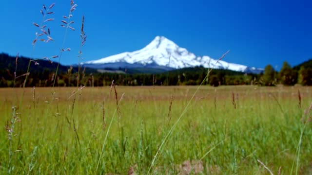 bright green grassy meadow and blue skies by a snowcapped mountain 3 summer on mound hood - portland oregon summer stock videos & royalty-free footage