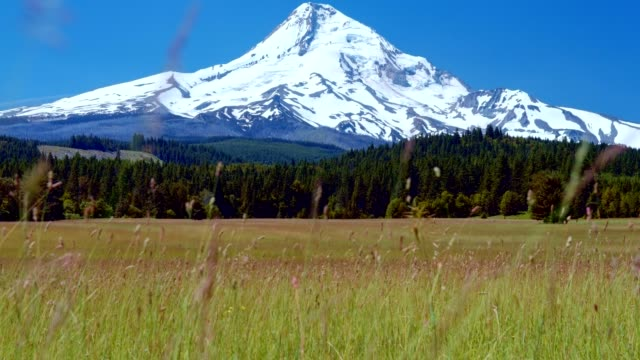 bright green grassy meadow and blue skies by a snowcapped mountain 5 summer on mound hood - portland oregon summer stock videos & royalty-free footage