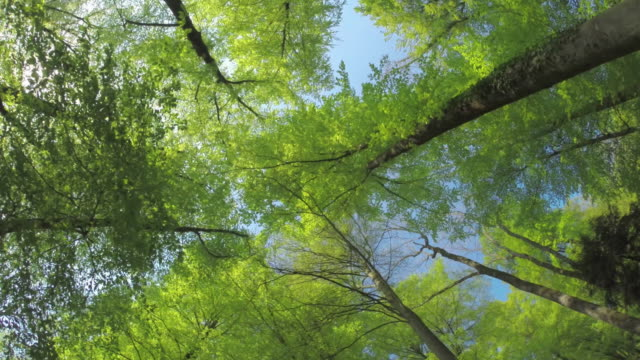 bright green leaves - tall high stock videos & royalty-free footage