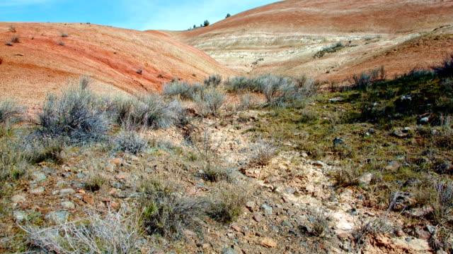 vídeos y material grabado en eventos de stock de bright midday painted hills spring sutton mountain john day great basin high desert columbia plateau - monumento nacional
