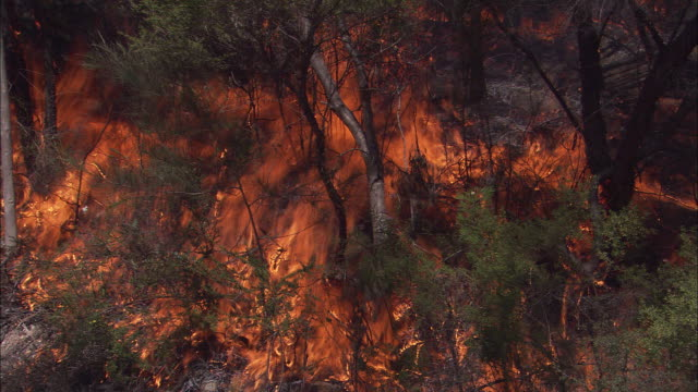 bright orange flames engulf a forest during a brush fire. - feuer stock-videos und b-roll-filmmaterial