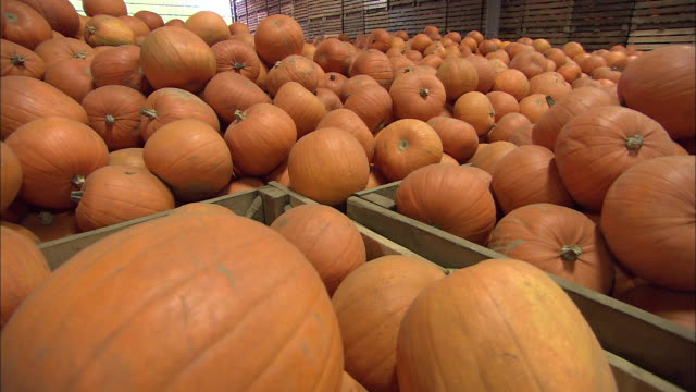 bright orange pumpkins fill warehouse crates. available in hd. - orange colour stock videos & royalty-free footage