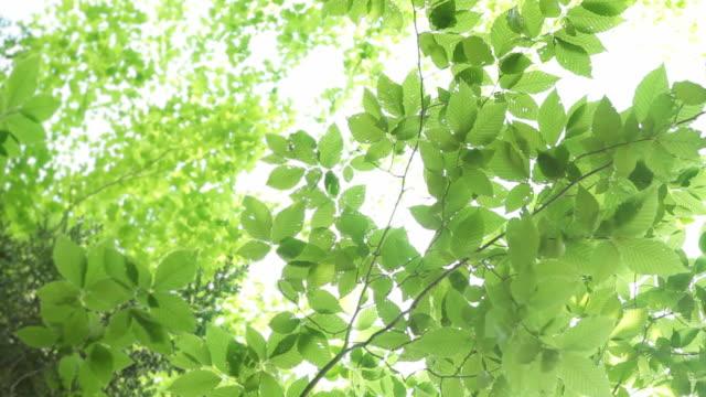 明るい樹木の葉
