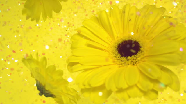 vídeos y material grabado en eventos de stock de a bright yellow gerbera and yellow daisies moving up towards camera surrounded by colorful glitter, on yellow background - pensamiento flor