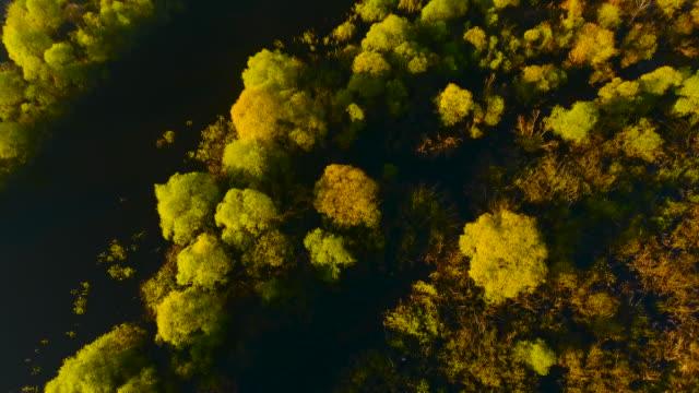 vídeos de stock, filmes e b-roll de brilhante amarelo-verde chartreuse árvores crescendo as águas do rio pripyat. belarus. - bielorrússia