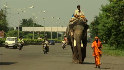 ws zo brightly dressed man walking, followed by another man riding elephant along highway, pune, maharashtra, india - tamdjur bildbanksvideor och videomaterial från bakom kulisserna
