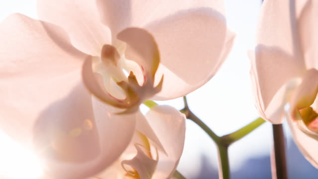 brightly lit orchid flower - bouquet stock videos and b-roll footage
