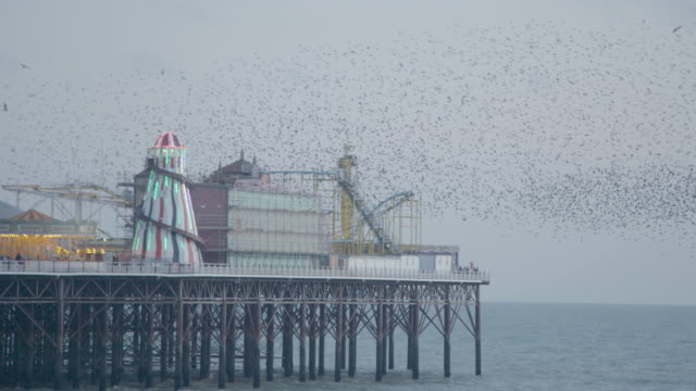 brighton palace pier in england with starling murmuration - brighton england stock videos & royalty-free footage