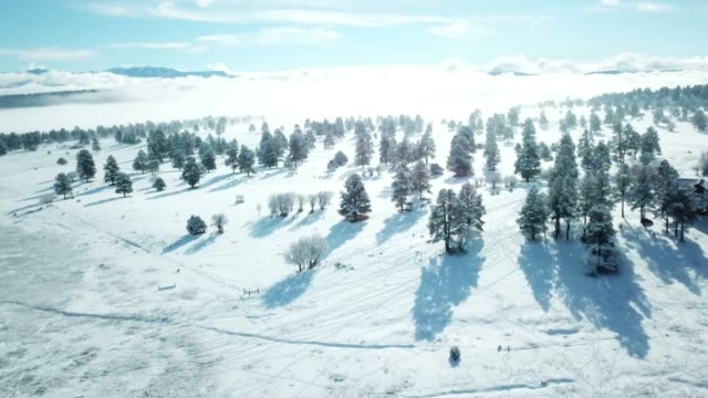 brilliant afternoon light above trees with fog - snowcapped mountain stock videos & royalty-free footage