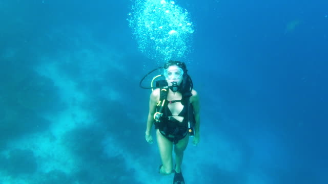 bring nothing back to the surface but memories - scuba diving stock videos & royalty-free footage
