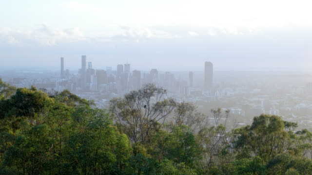 Brisbane city bush