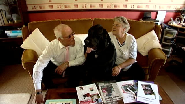 britain's biggest dog: owners appeal for help to pay for surgery; samson being petted by owners as sits beside them on sofa - biggest stock videos & royalty-free footage