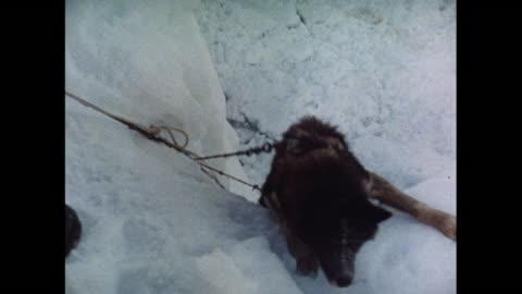 vídeos y material grabado en eventos de stock de montage british scientists explore landscape using dog sleds in antarctica - antarctica
