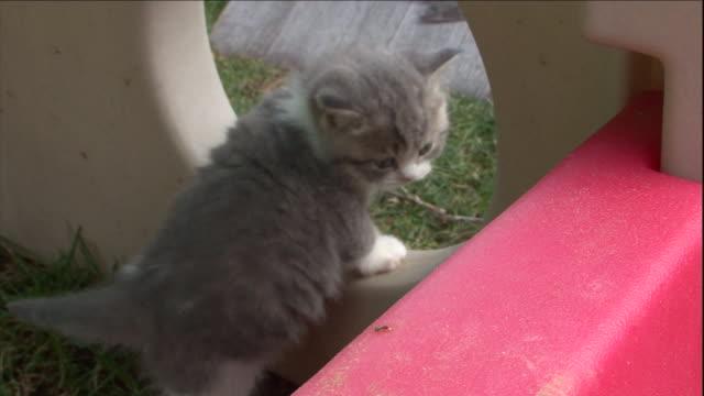 a british shorthair kitten climbs through a playhouse. - playhouse stock videos & royalty-free footage