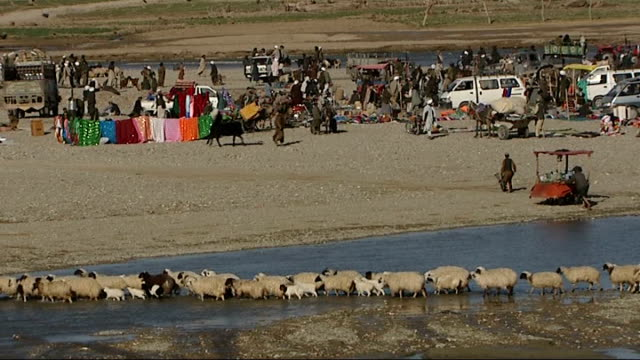 vidéos et rushes de british soldiers in musa qala long shot of afghani people beside river zoom in to shepherd leading flock of sheep and lambs across water afghan... - chiffon
