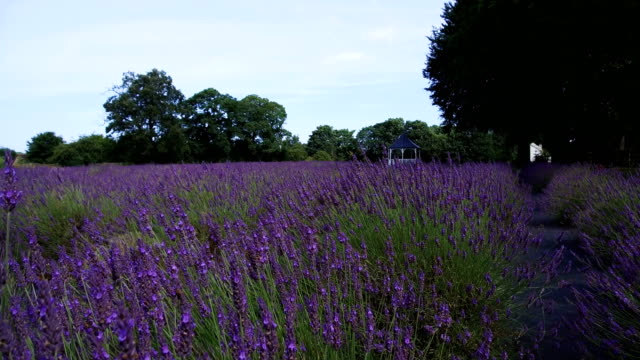british wild flowers blooming - wide shot stock videos & royalty-free footage
